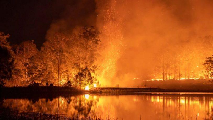 Los incendios en Australia amenazan a 327 especies de animales y plantas