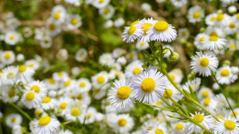 La importancia de las plantas medicinales para sanar el cuerpo y las emociones