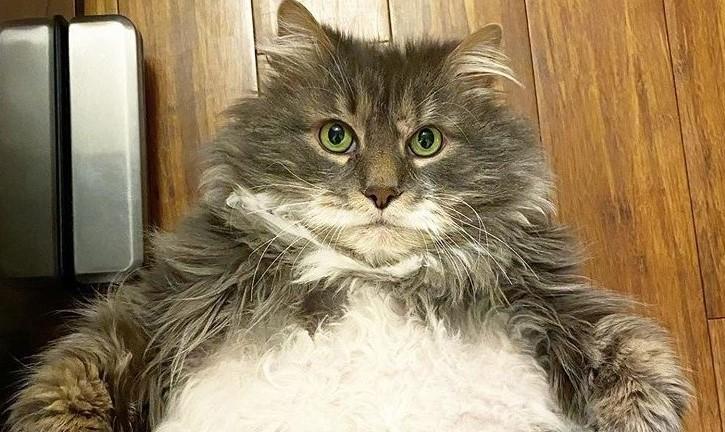 El insólito motivo por el que un gato no encuentra un adoptante