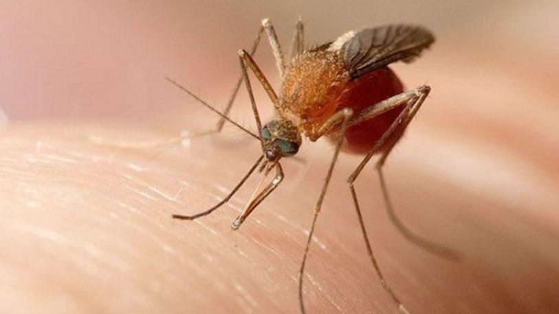 Mercosur: cumbre sanitaria por avance de dengue, sarampión y coronavirus