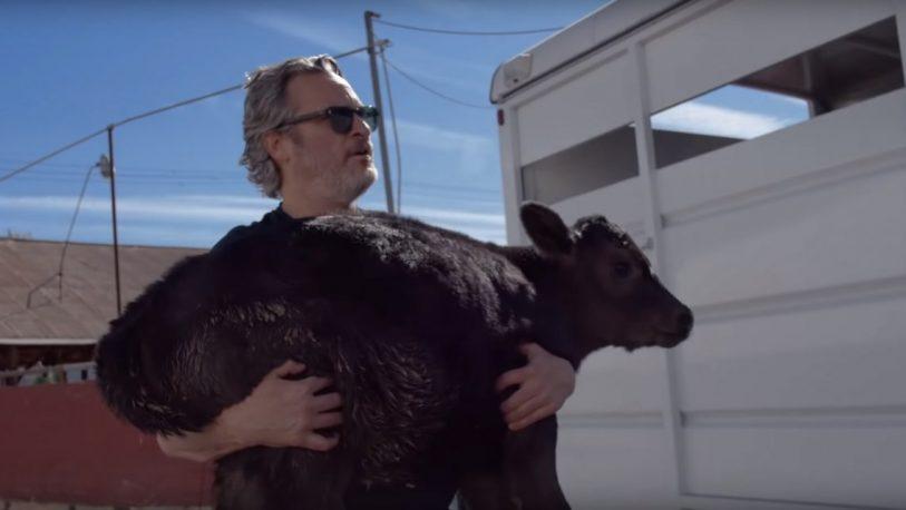 Joaquin Phoenix rescató a una vaca y a un ternero de un matadero