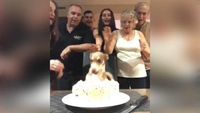 Le hicieron una fiesta de cumpleaños al perro y se hizo viral
