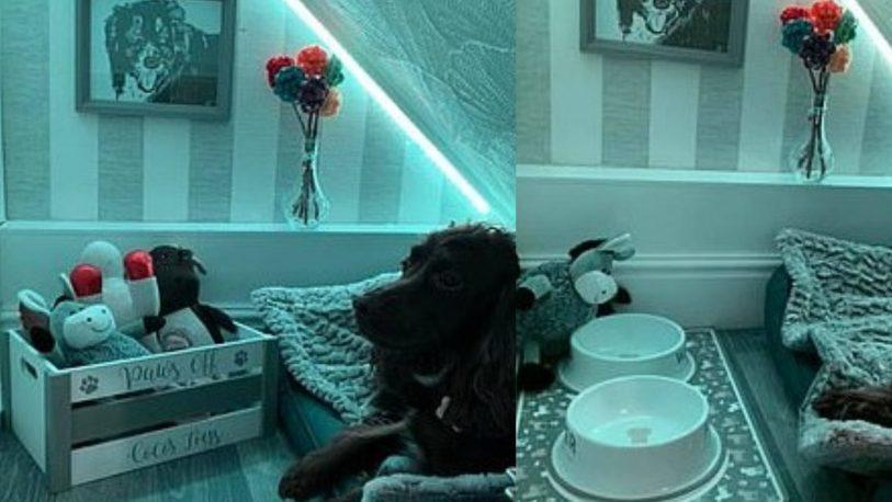 Le armó una habitación a su perro y se volvió viral