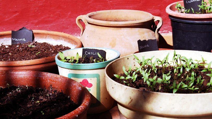 Conocé las plantas aromáticas que podés tener todo el año