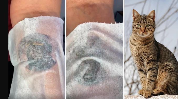 Se hizo un tatuaje con el rostro de su gato y el resultado fue sorprendente