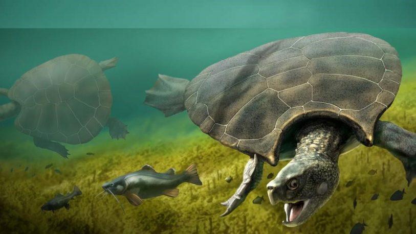 Hallan restos de una tortuga gigante