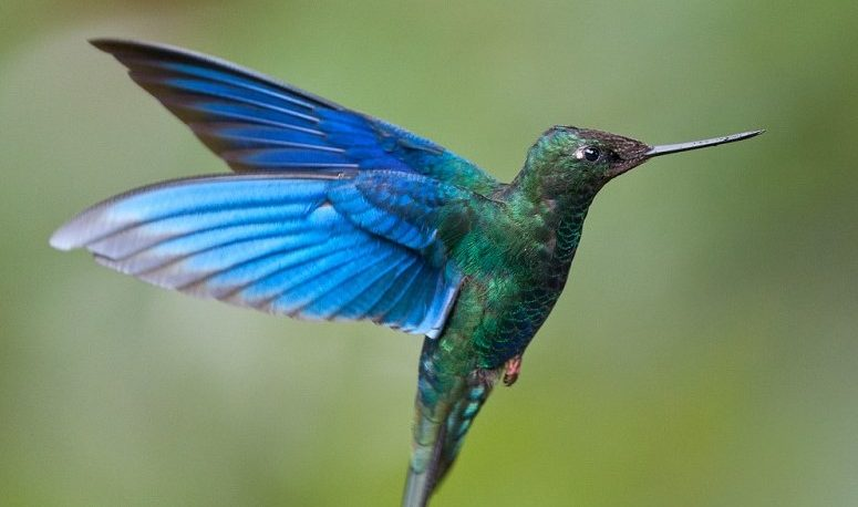 Por un nido de colibríes, una obra de construcción tuvo que ser interrumpida