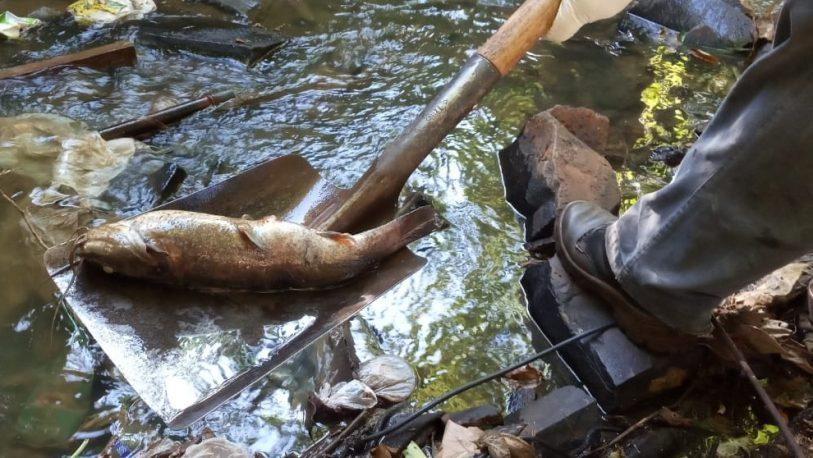 Se retiraron 450 kilos de peces del Arroyo Vicario