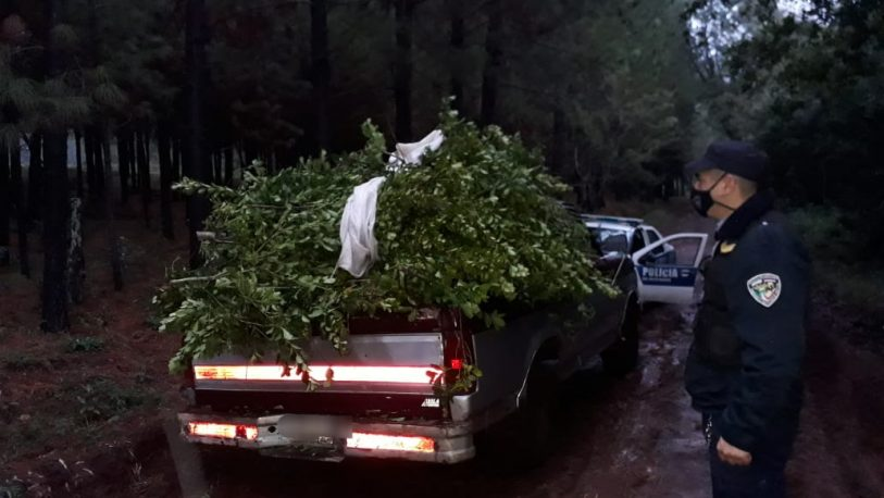 Recuperaron 600 kilos de yerba robada en Gobernador López