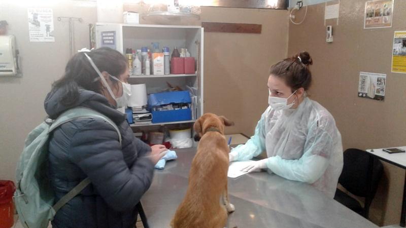 El IMuSA habilitó turnos para adopciones y vacunación antirrábica