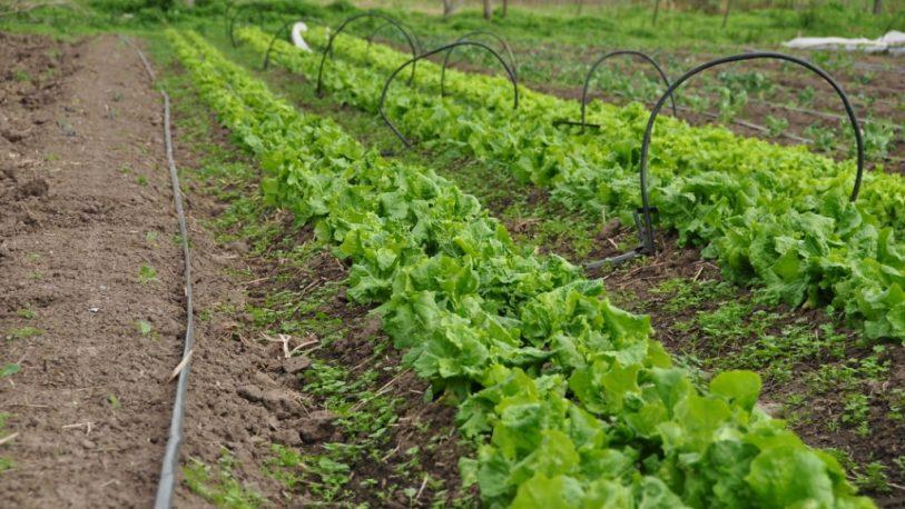Huerta: qué plantar en diciembre