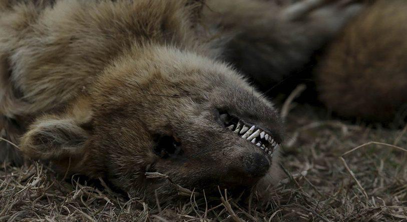 """Advierten que los incendios en humedales """"son una tragedia"""" para flora y fauna de las islas del Delta"""