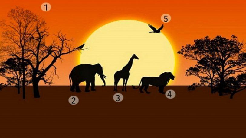 Selva-africana-test-de-personalidad-813x458