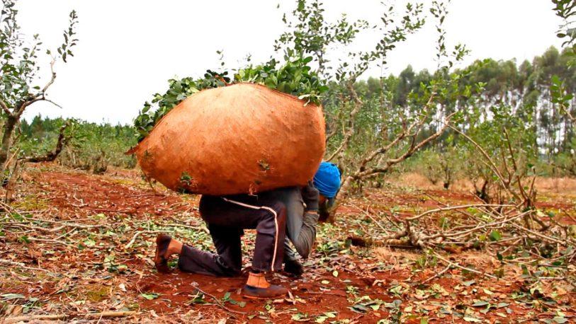 CAME: los planes sociales desincentivan la oferta laboral en las economías regionales