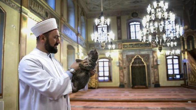 Los musulmanes y su gran afecto hacia los gatos