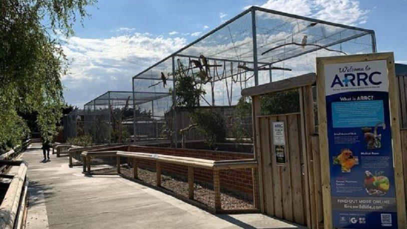Cinco loros fueron aislados de un zoológico porque insultaban a turistas