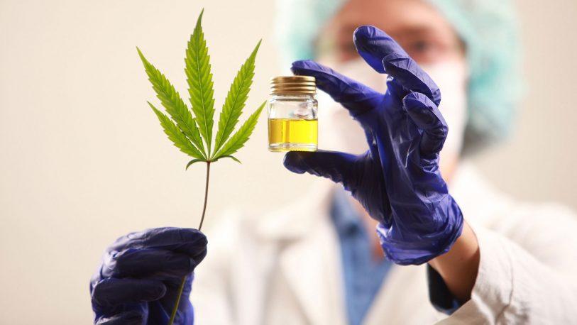 Cannabis: legalizaron el autocultivo para uso medicinal