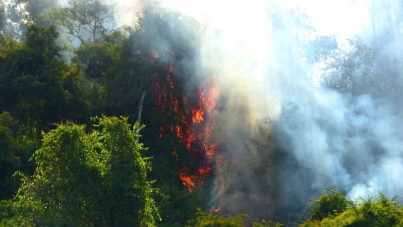 Reserva Yabotí: Más de 120 hectáreas consumidas por el fuego