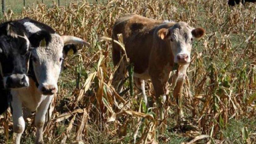 Recomiendan declarar emergencia agropecuaria en tres provincias