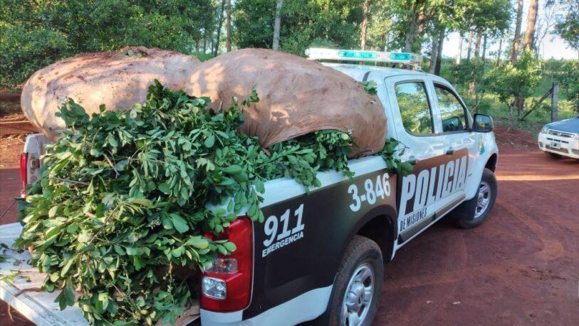 Robo de yerba: productores piden al Gobierno mayor inversión en la policía