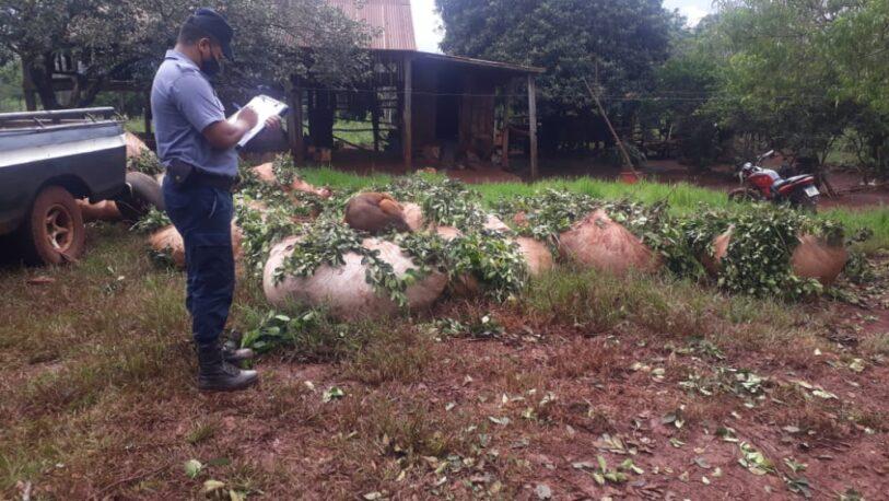 Secuestraron 6000 kilos de yerba en Puerto Leoni y Eldorado