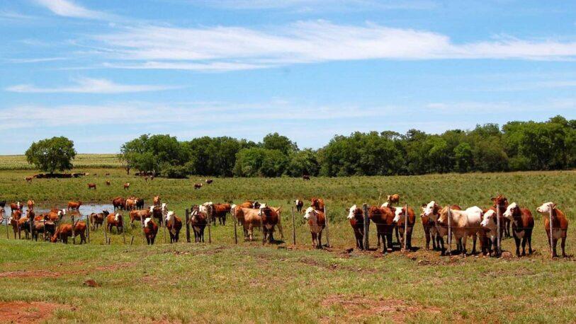Agricultura declaró la emergencia agropecuaria en Misiones