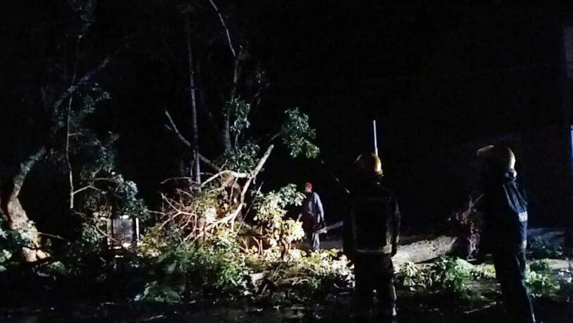 Jardín América: un fuerte temporal dejó varios árboles caídos