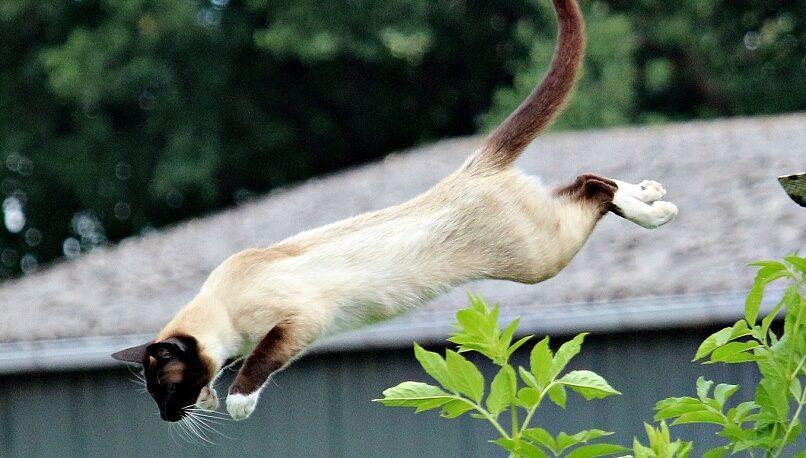 Revelan por qué los gatos siempre caen parados
