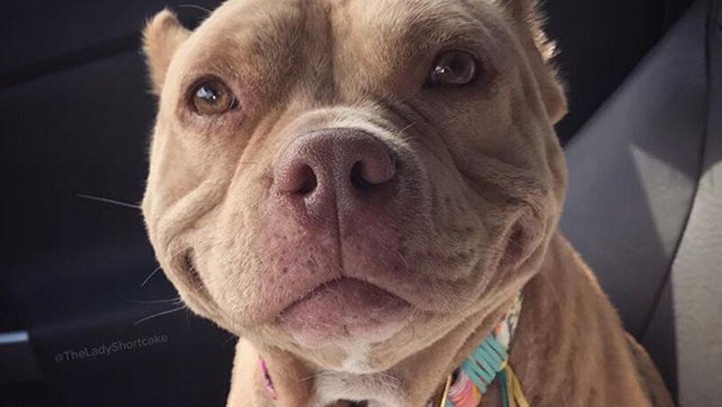 Buenos Aires: nuevos requisitos para el registro de perros peligrosos