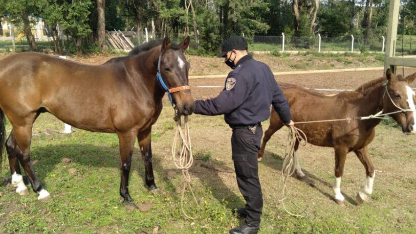 Inseguridad en las chacras: recuperaron caballos robados en Cerro Corá