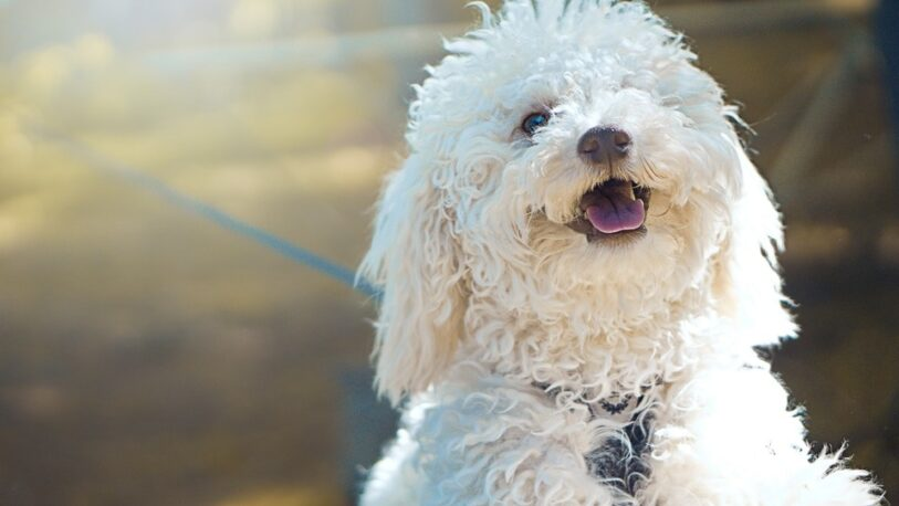 Mantener una mascota puede costar más de $100 mil por año