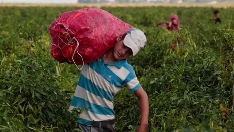 El trabajo infantil aumenta por primera vez en 20 años