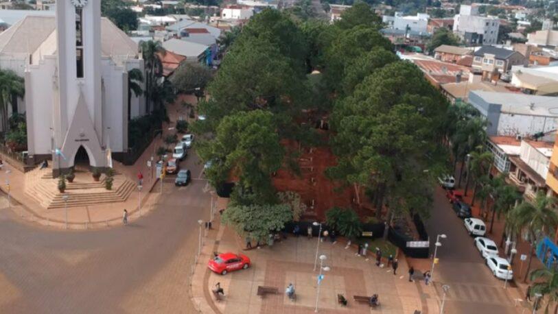 Polémica por los pinos: vecinos de Oberá piden una audiencia pública