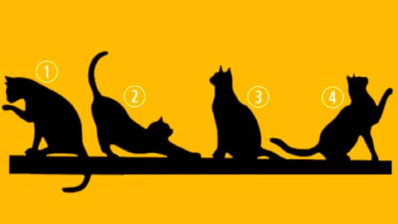 Nuevo test viral: elige el gato que más te gusta y descubrirás lo más importante de tu personalidad