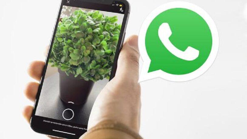 La cámara de WhatsApp se ve con zoom: ¿Cómo solucionarlo?