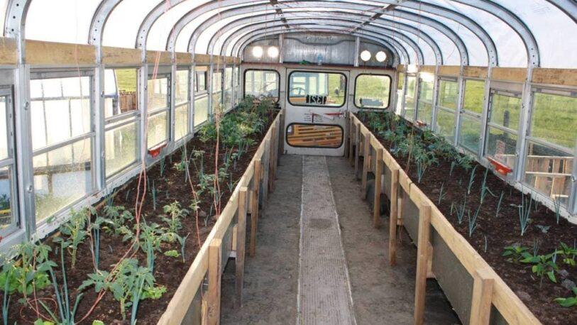 Recicló varios ómnibus para usarlos como invernaderos