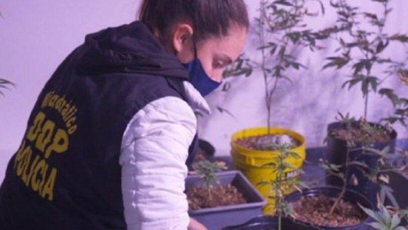 Alquilaba un departamento solo para cultivar marihuana