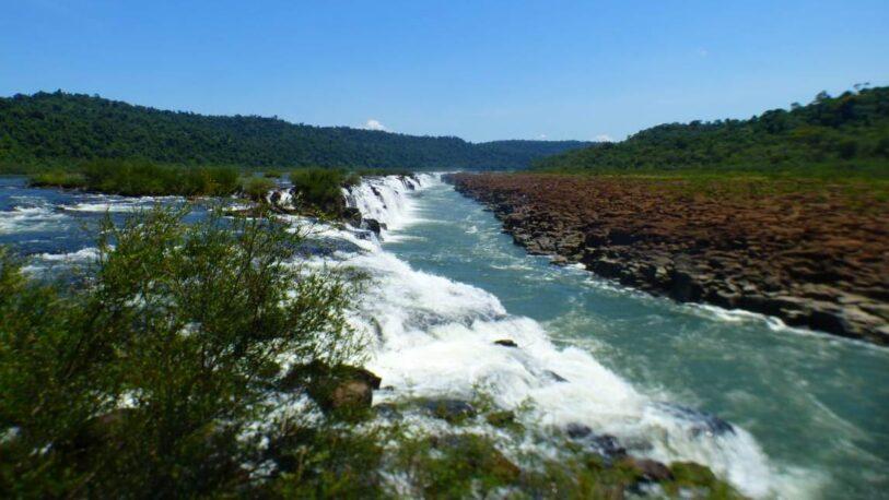Filmaron a un yaguareté en los Saltos del Moconá