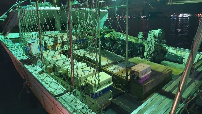 Taiwán ordenó sacrificar gatos por temor a transmisión de enfermedades