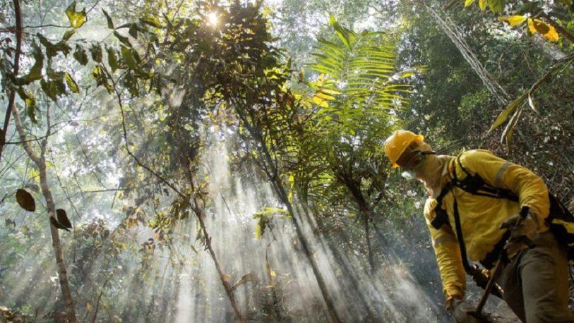 Por primera vez, la Amazonia genera más dióxido de carbono del que absorbe