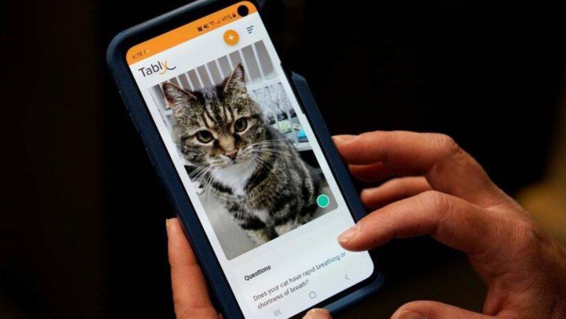 Lanzan una aplicación que permite a los humanos saber si su gato es feliz