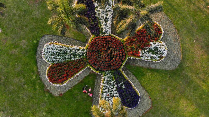 Plantaron más de dos mil plantines en rotondas de la ciudad