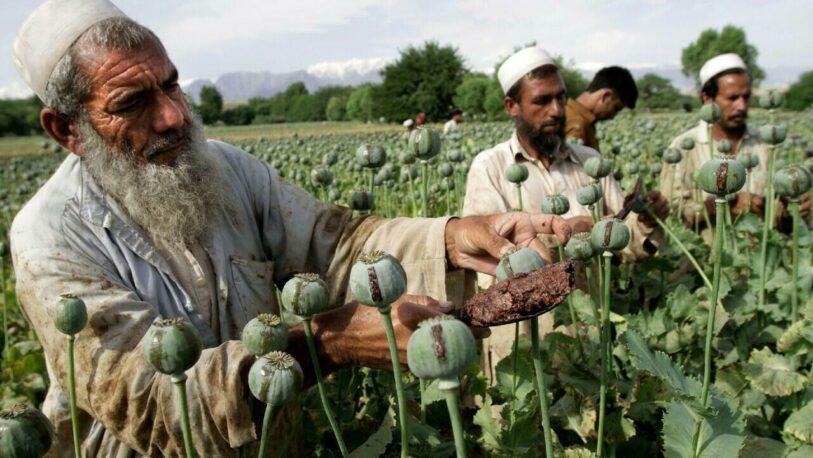 El valor del opio se triplicó en Afganistán