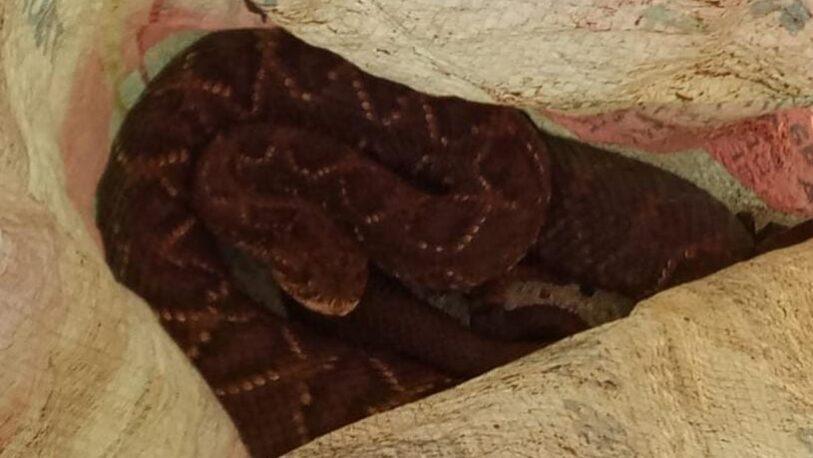 Rescatan y resguardan una serpiente en Caraguatay