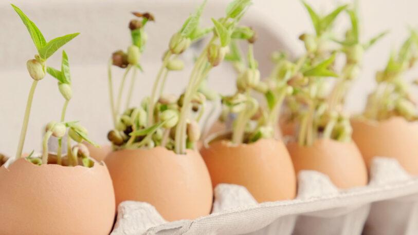 Aprendé a plantar semillas en cáscara de huevo