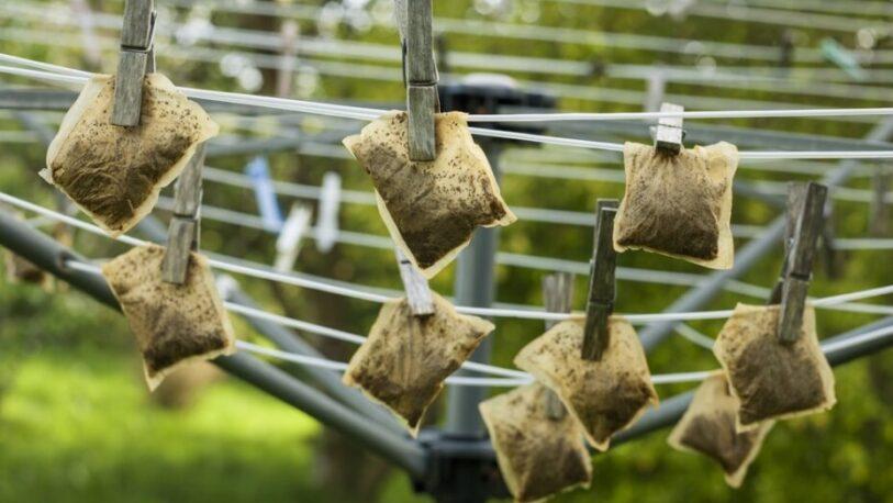 Por qué enterrar las bolsas de té en el jardín