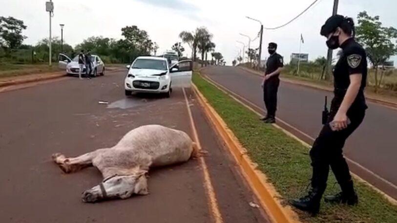 Chocó y mató a un caballo en pleno acceso oeste