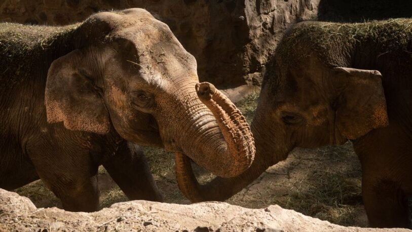 Mendoza: elefantas del Ecoparque serán trasladas a Brasil