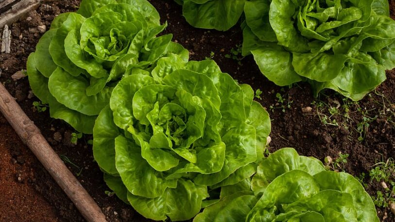 Huerta de primavera: ¿Qué se puede sembrar en septiembre?