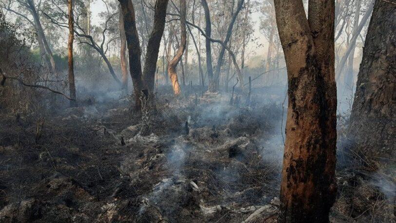 Incendios forestales: se quemaron dos hectáreas en Puerto Iguazú